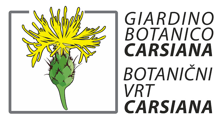 logo carsiana